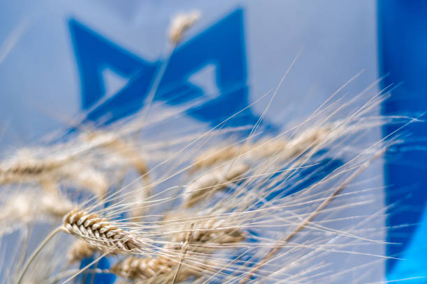 日落-以色列獨立日以色列國旗背景與干小麥的隔離特寫圖像檔