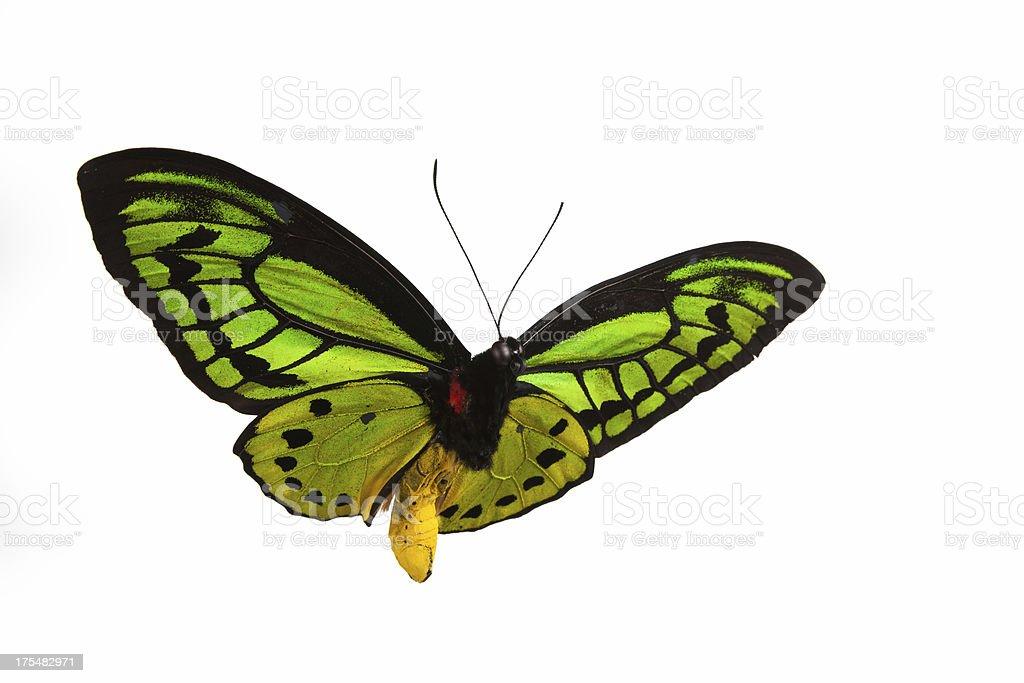 Borboleta com padrão verde voando contra um pano de fundo branco - foto de acervo