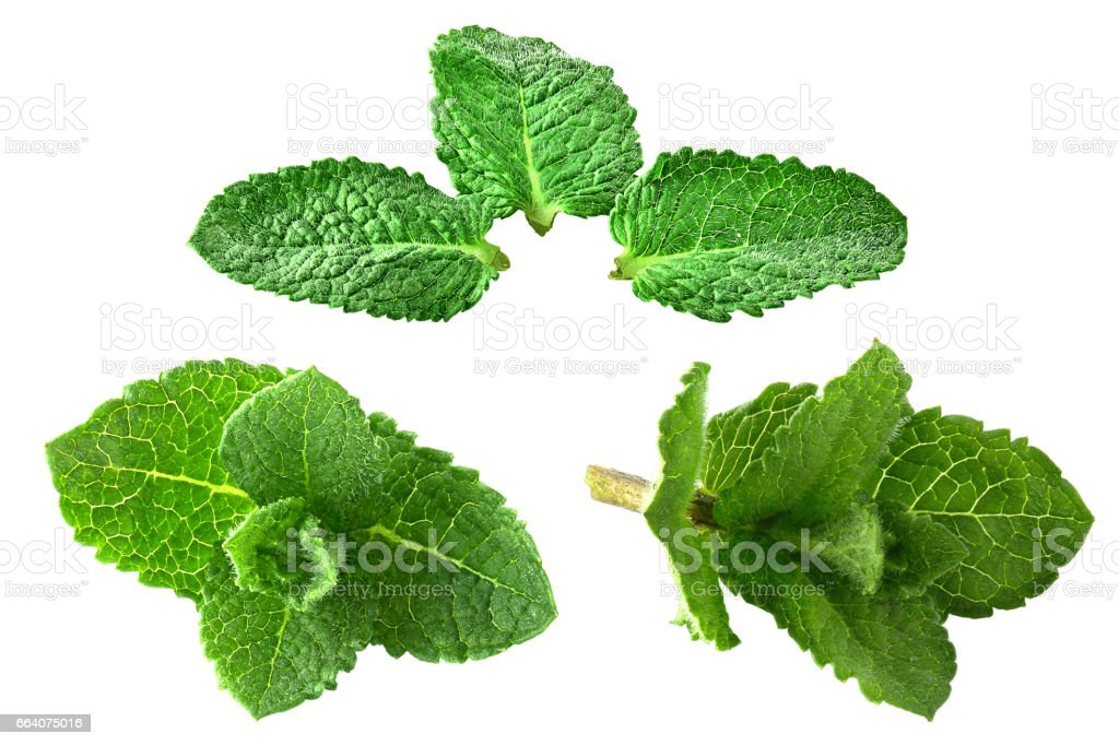 Isolated collection fresh mint - foto stock