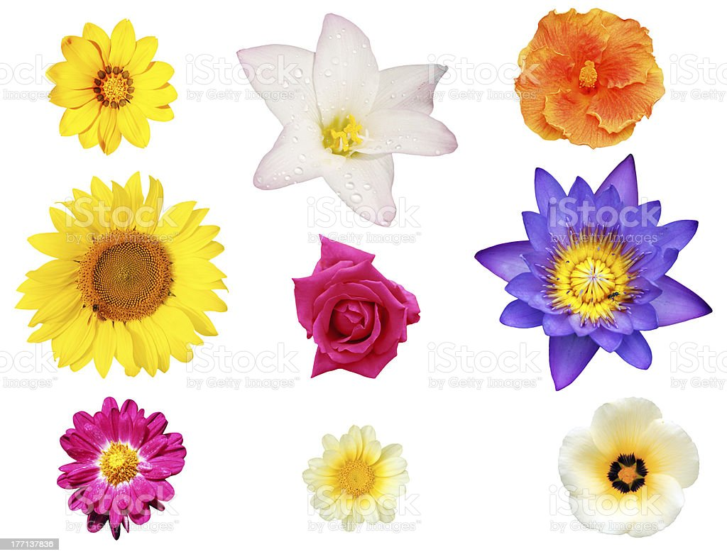 Isolated collection of flowers like lily hibiscus daisy stock photo isolated collection of flowers like lily hibiscus daisy royalty free stock photo izmirmasajfo