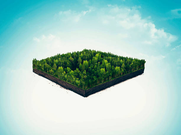 sección aislada, tajada de suelo de la selva, taiga, bosque profundo. 3D ilustración de fondo claro. - foto de stock