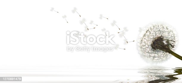 Beautiful dreamy spring with white background