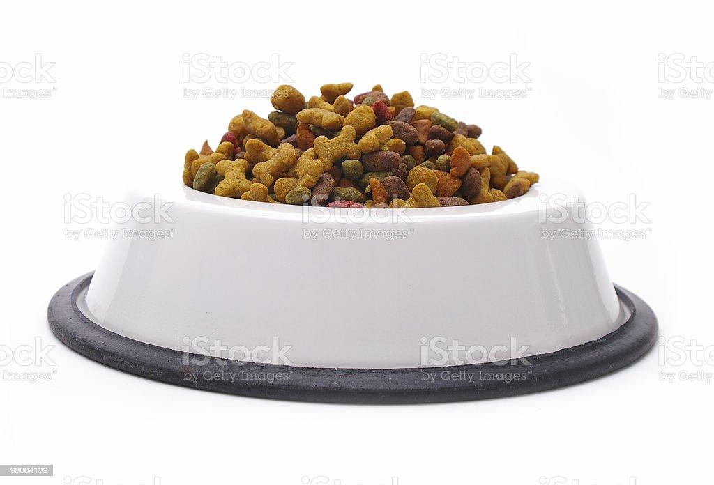 Cão isolado prato foto royalty-free
