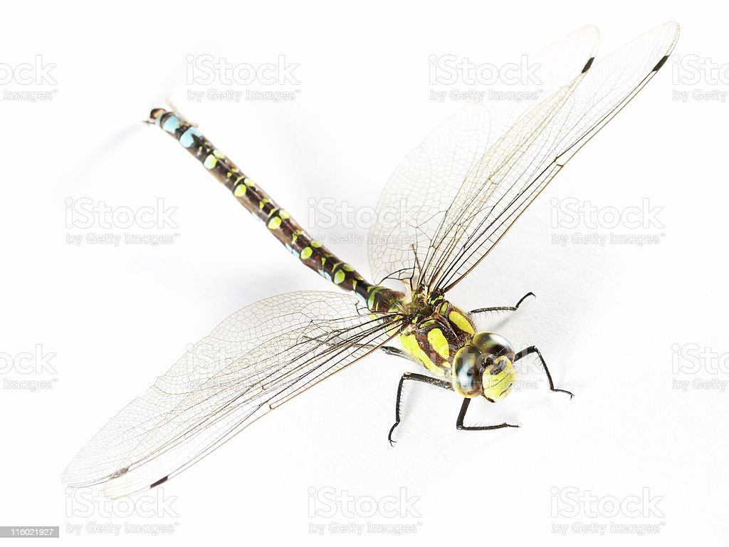 Isolated dragonfly 04 stock photo