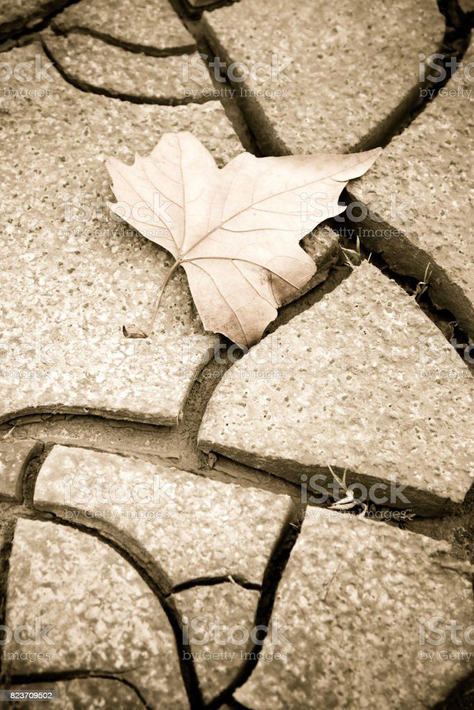 Isolated dry leaf on the ground - concept image stock photo