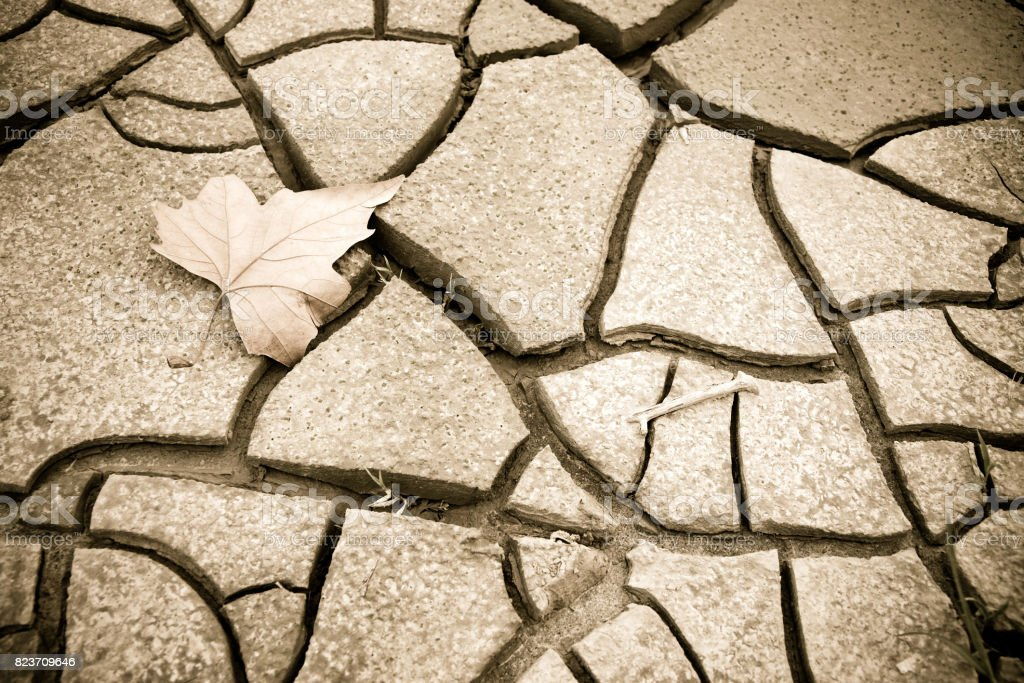 Isolated dry leaf on the ground - concept image with copy space stock photo