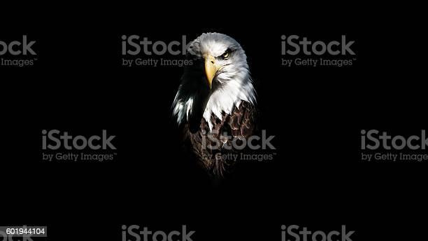 Isolated eagle stare picture id601944104?b=1&k=6&m=601944104&s=612x612&h=xlgg6hatiocwwerukhukoljgje hgeqgidowox6j8hq=