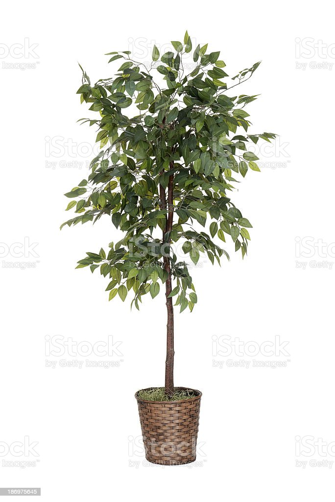 isolated fake tree stock photo