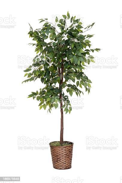 Photo of isolated fake tree