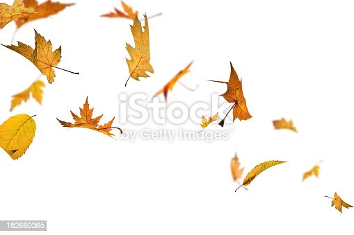 Autumn leaves spinning in the wind
