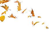 絶縁落ちる秋の葉