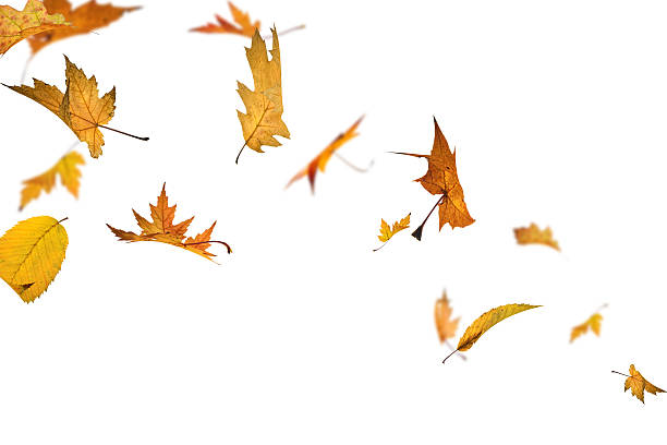 isolated falling autumn leaves - blowing stock photos and pictures