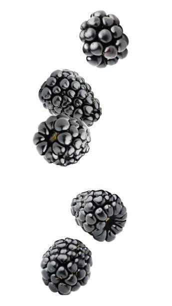 Isolated falling blackberries stock photo