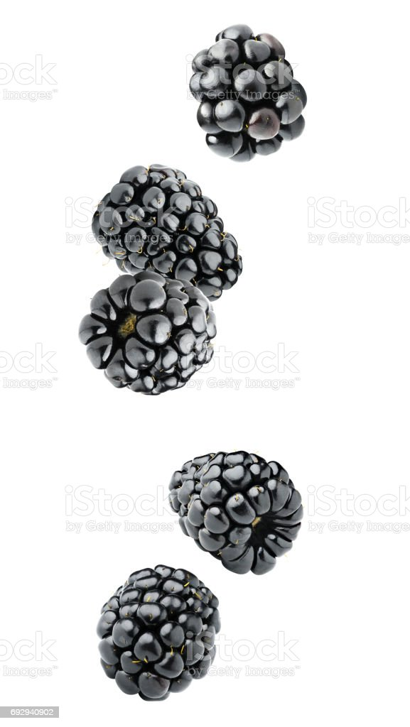 Isolated falling blackberries stock photo