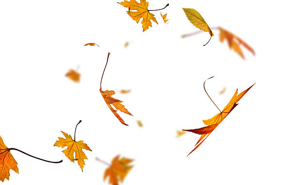 Isolated falling leaves stock photo