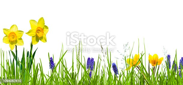 istock isolated flower bed in springtime on white 1094062410