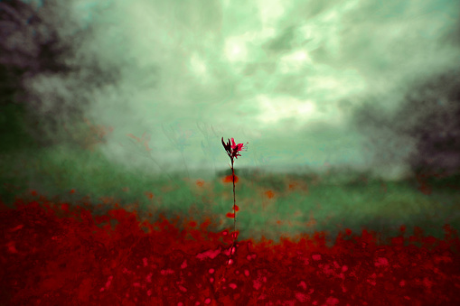 Isolated flower in a field