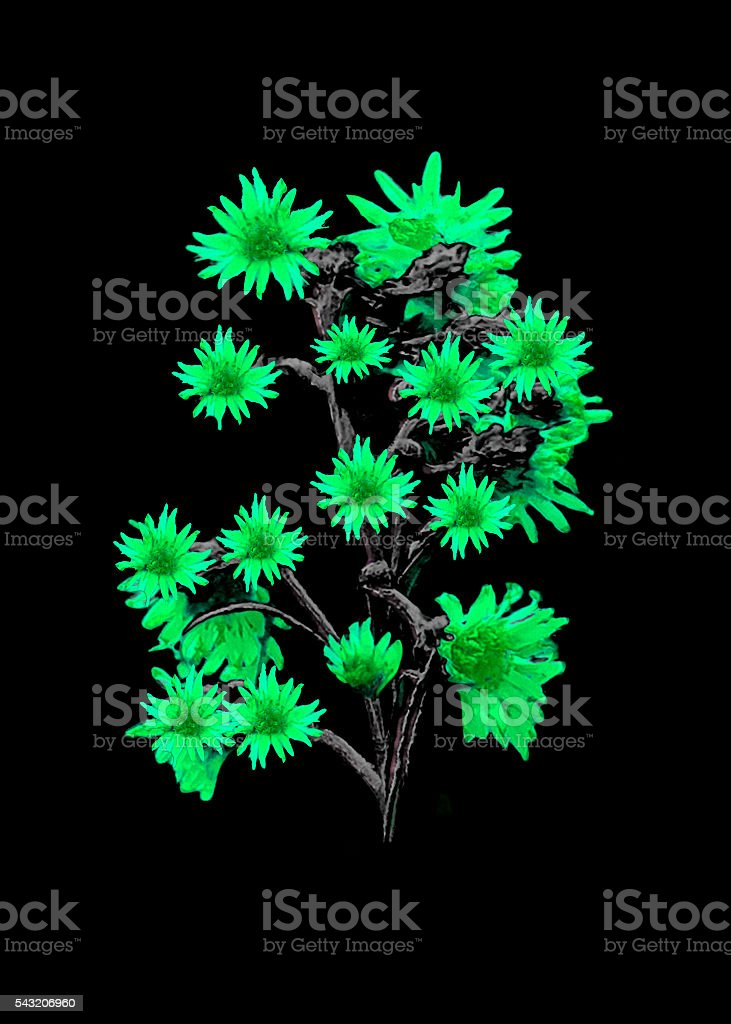 Isolated Flowers over Black stock photo