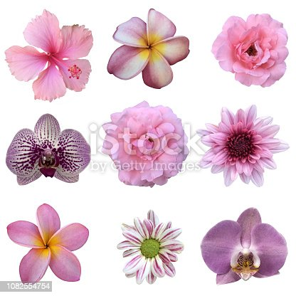 Vast variety of daisies flowers and designs in my portfolio