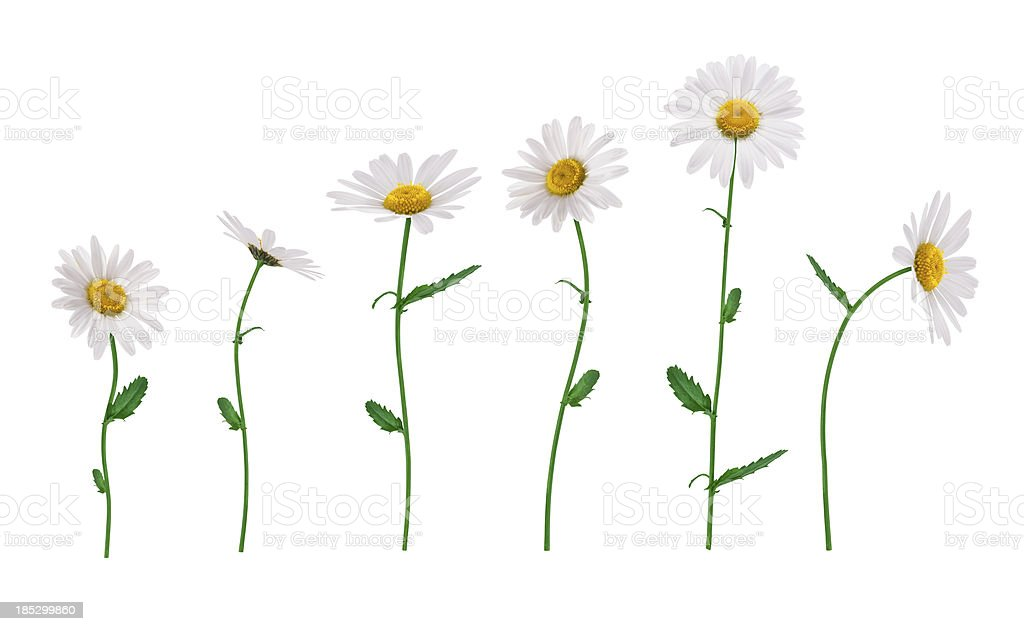 Isolated Flowers royalty-free stock photo