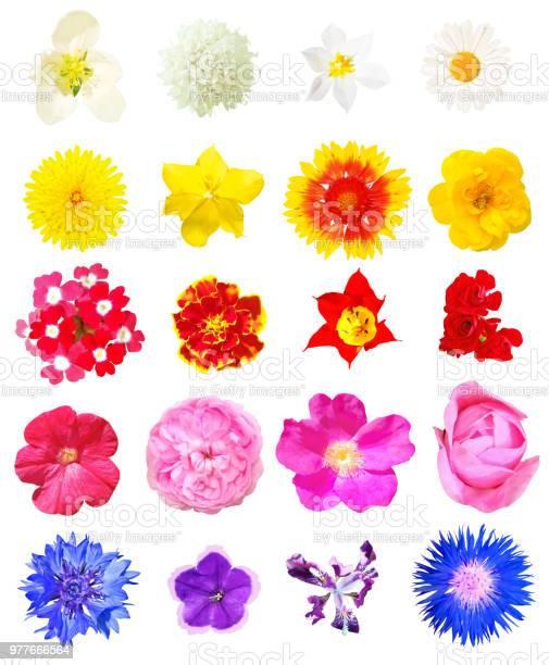 Isolated flowers set picture id977666564?b=1&k=6&m=977666564&s=612x612&h=gjvmxzvpmvpgjukg9ba hsj0wouasjg3nmntyt9sovi=