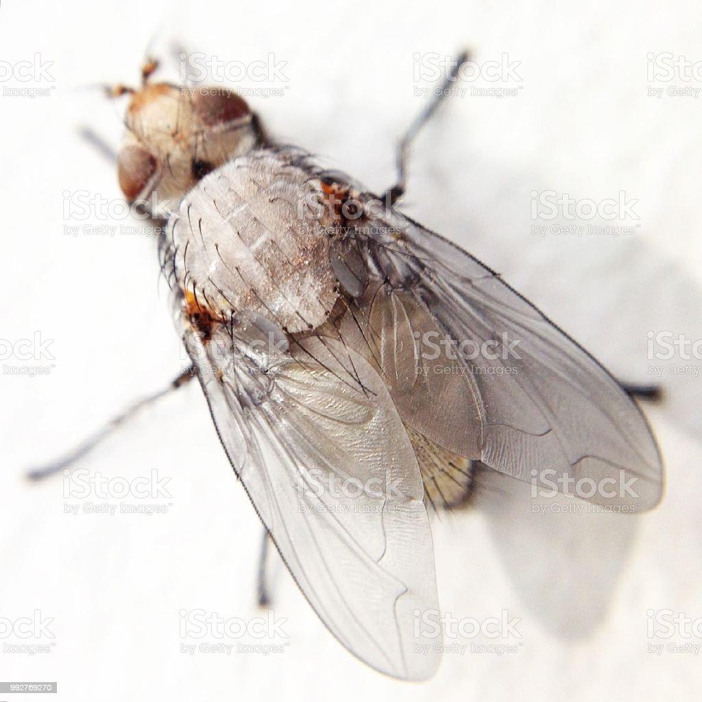 Mouche isolée dans macro détail gros plan - Photo