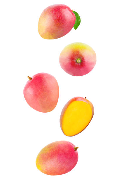 Isolated flying fruits. Falling Whole mango isolated on white background with clipping path as package design element and advertising stock photo