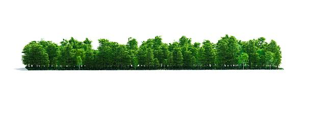 Isolated Forest Stripe stock photo