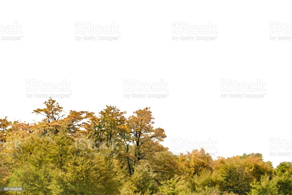 Isolated Forest Tree Background royalty-free stock photo