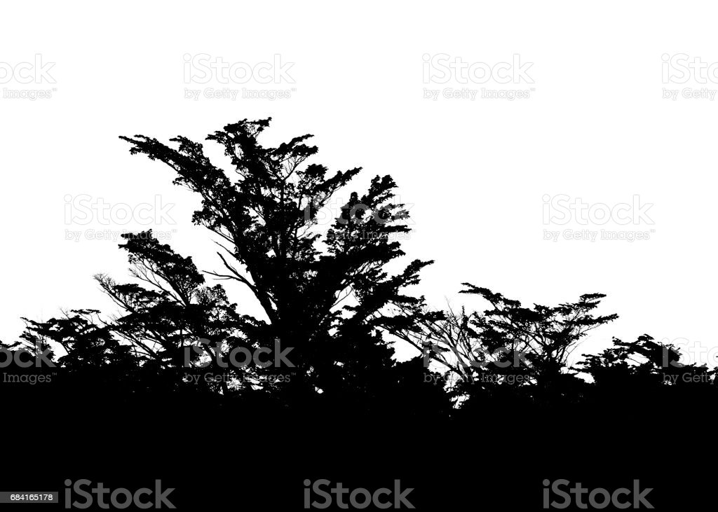 Isolated Forest Tree Silhouette in white Background royalty-free stock photo