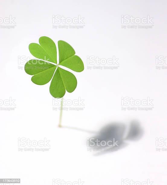 Isolated four leaf clover casting shadow picture id172643510?b=1&k=6&m=172643510&s=612x612&h=3hrfvpwmr1sn7laamuunlqgg2u3voytfmfnut9raazy=