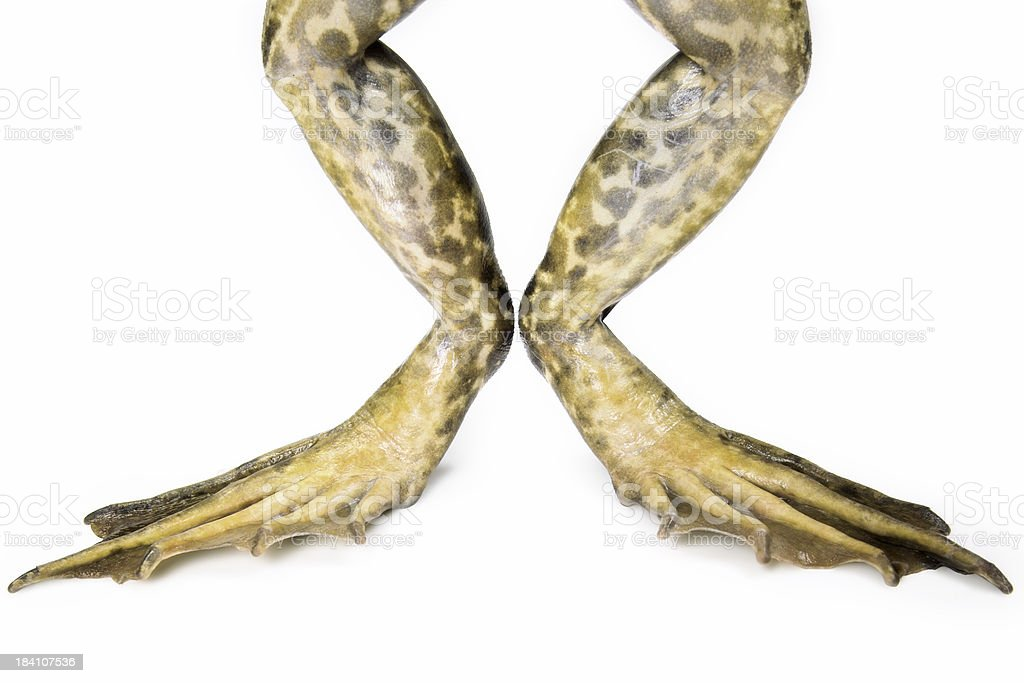 Isolated Frog Legs royalty-free stock photo