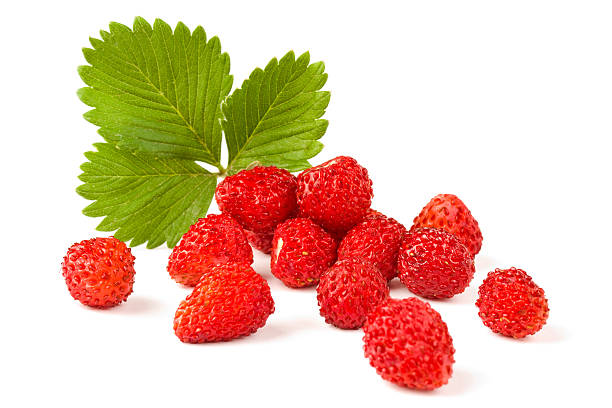 isolated fruits - wild strawberries - wilde aardbei stockfoto's en -beelden