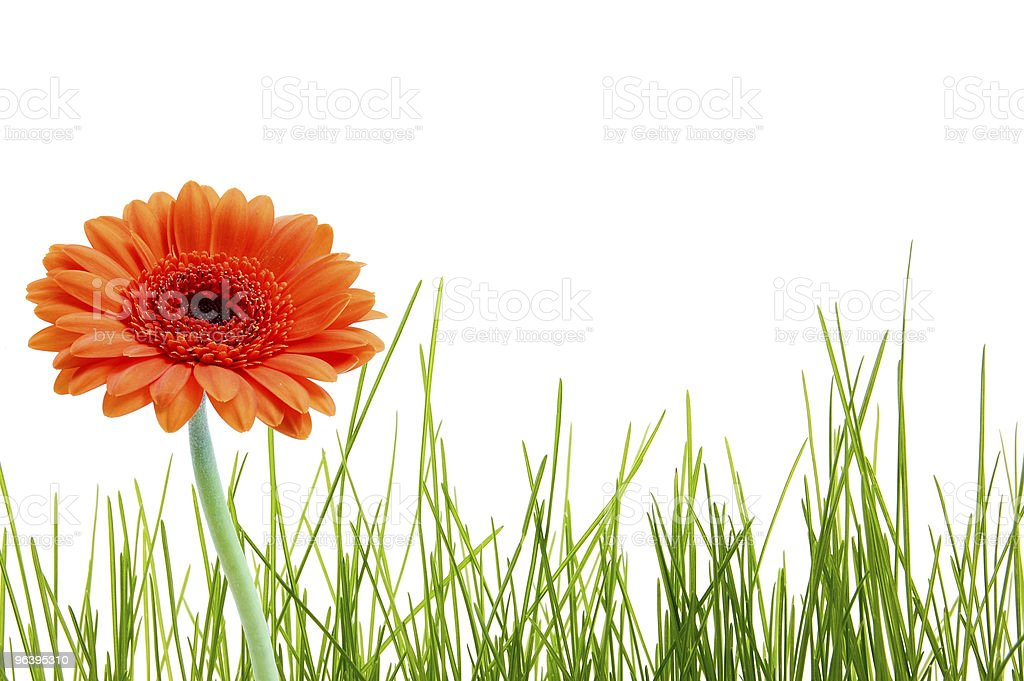 isolated grass and flower - Royalty-free Beauty In Nature Stock Photo