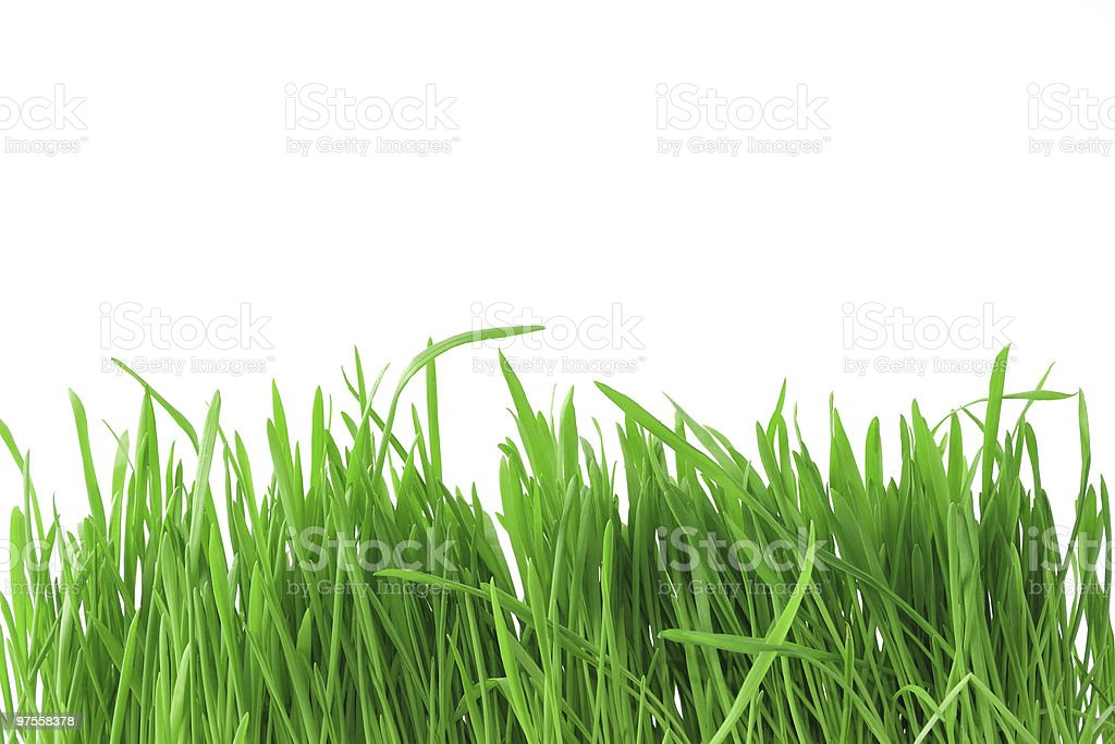 Isolated grass background royalty-free stock photo
