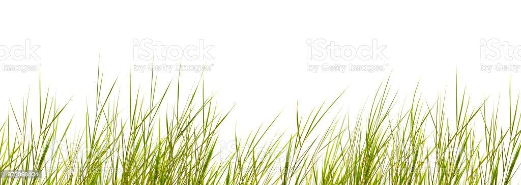 brins d'herbe isolé sur fond blanc photo libre de droits