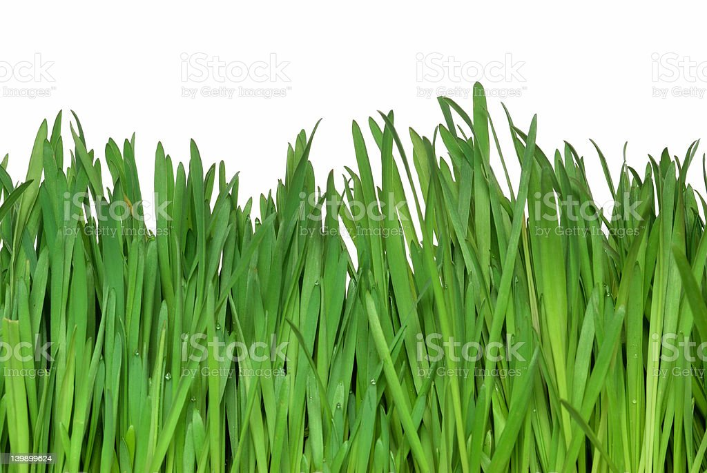 isolated grass [clipping path] royalty-free stock photo
