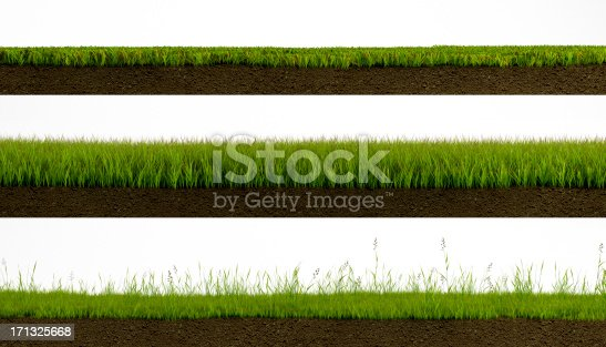 3 types of Isolated grass on white background cross section with soil
