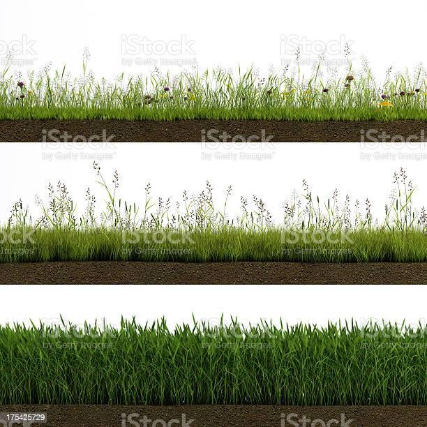 Isolated grass picture id175425729?b=1&k=6&m=175425729&s=612x612&h=9vijch2mh1rq0lrjwjou4tow6bktso kzyyhed4 k2c=