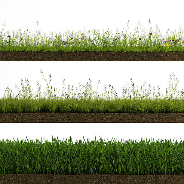 erba isolato - grass isolated foto e immagini stock