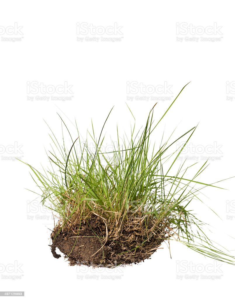 Isolated grass stock photo