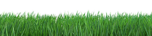 Isolated grass with path stock photo