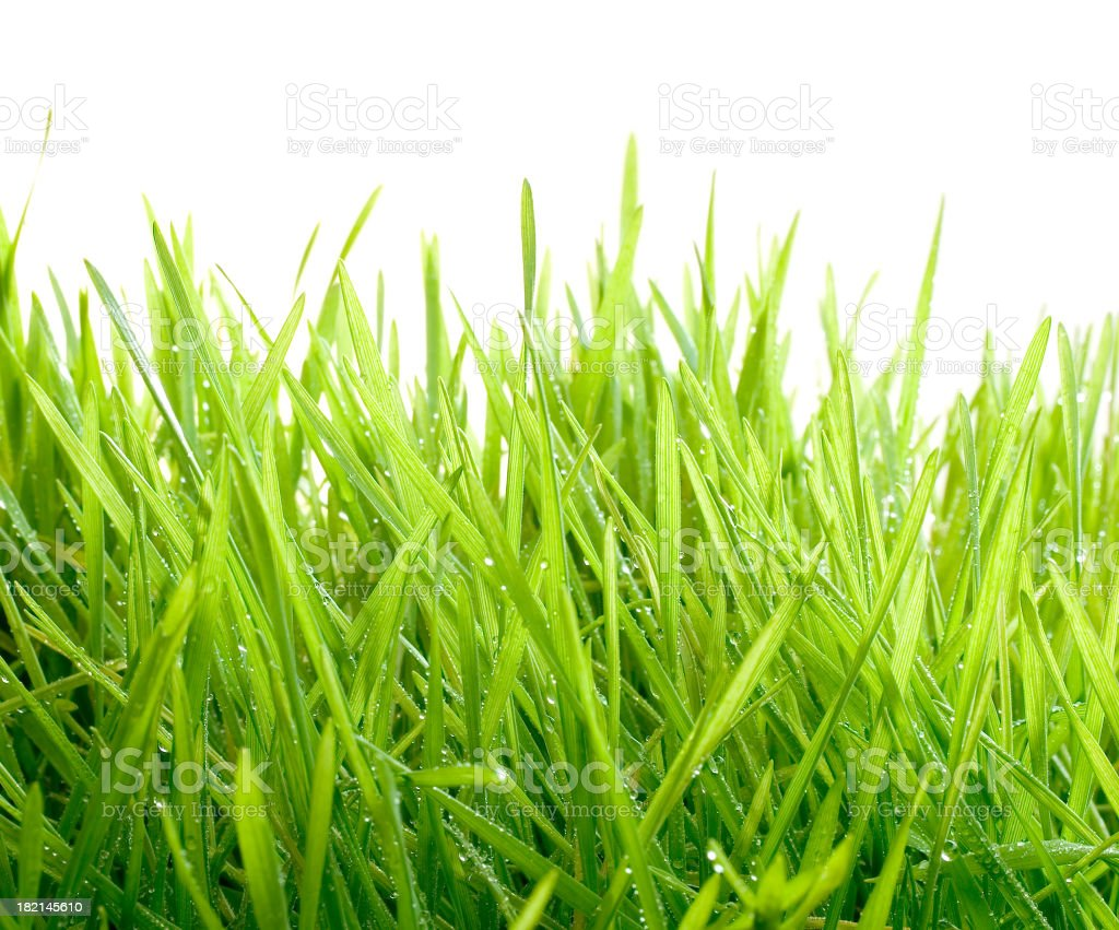 Isolated Grass with Raindrops royalty-free stock photo