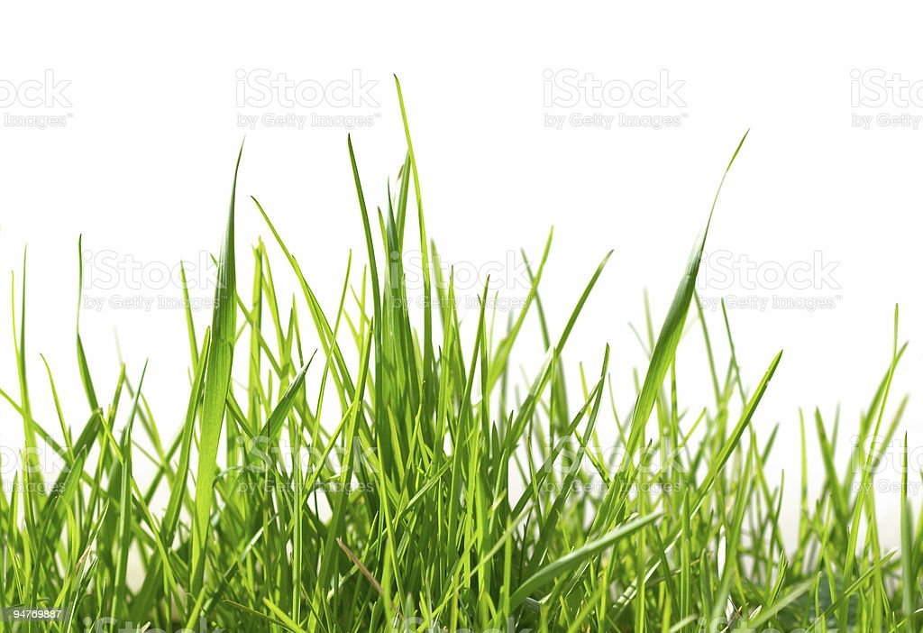 Isolated green grass pattern stock photo