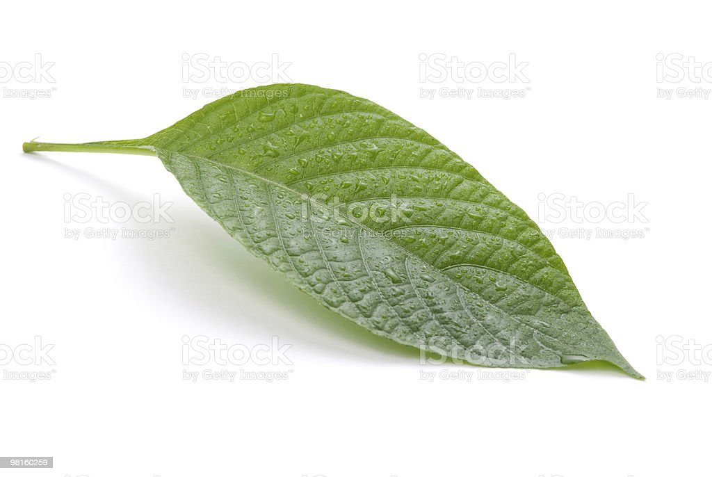 Isolated green leaf royalty-free stock photo