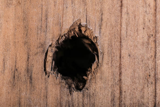 Isolated Hole in Wood Plank stock photo