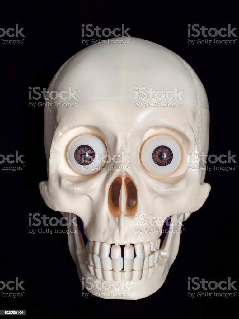 isolated human skull stock photo