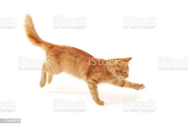 Isolated image of an orange and beige kitten jumping picture id119562379?b=1&k=6&m=119562379&s=612x612&h=1rqfi1kwuatskirbqa30lp8g5h5oqel9hjwl5kcrkim=