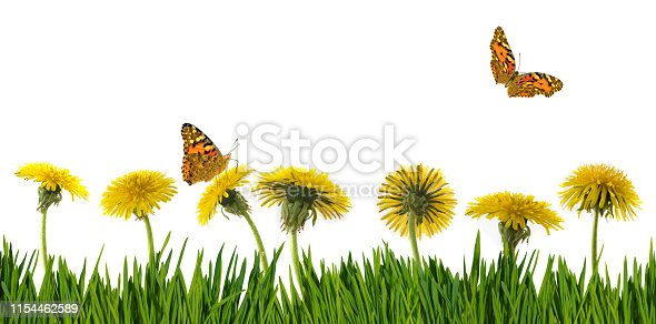 isolated image of dandelions and butterfly