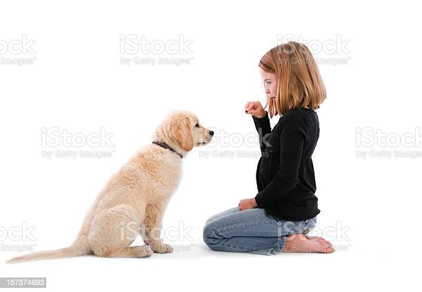 Isolated image of girl sitting on floor with treat and puppy picture id157374693?b=1&k=6&m=157374693&s=612x612&h=gcbycu1tcx3nsghqxychdaoc4py8g2 wl788edt slu=
